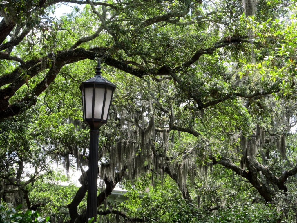 Visit Savannah's Forsyth Park, there's sugar in my tea, charlotte nc lifestyle bloggers, nc blogs